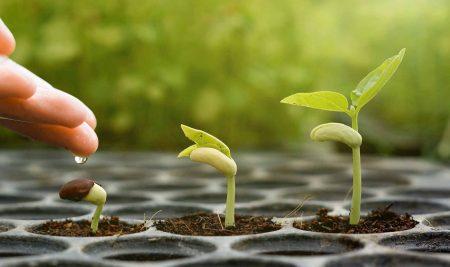 عالیترین مؤلفه رشد در جامعه چیست؟