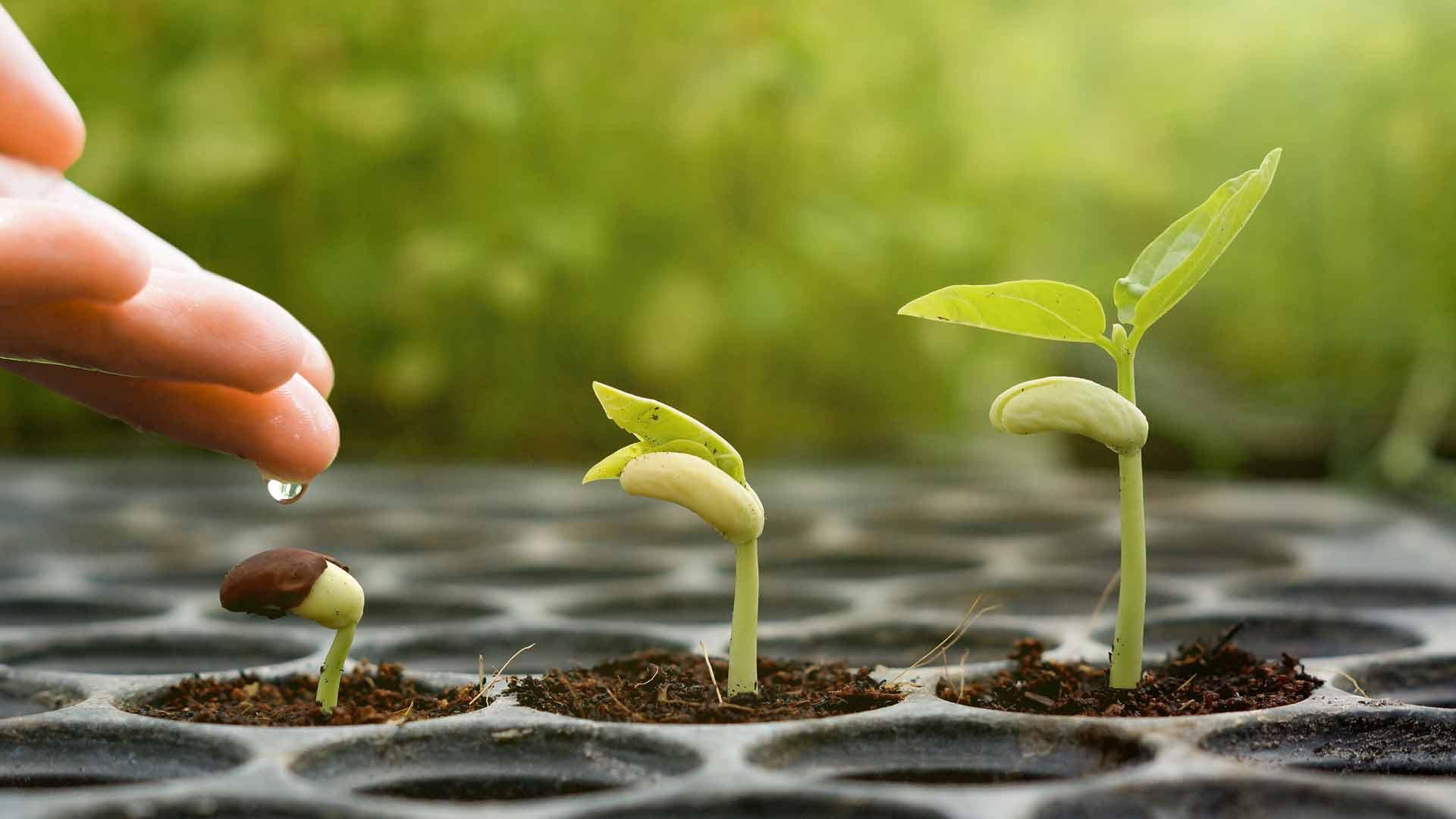 رشد و پیشرفت
